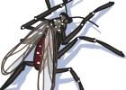 El virus y el mosquito