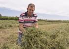 Alfalfa de Teruel para Buckingham