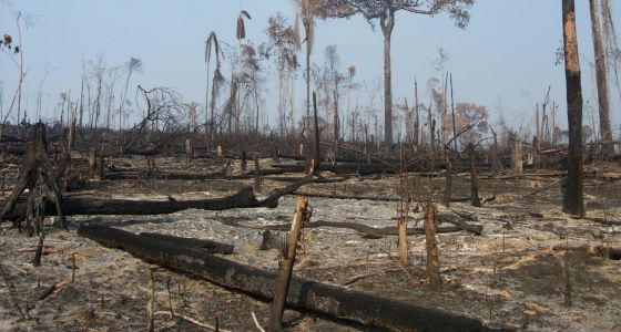 La Amazonia ha perdido ya casi el 20% de su extensión original.