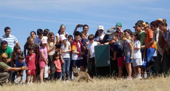 Liberación de un lince en Sierra Morena oriental, en julio de este año
