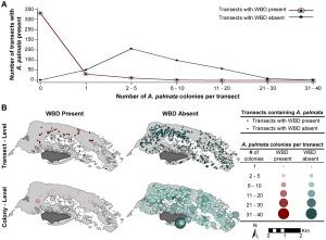 Gráfico que muestra la reducción de la especie de coral palmata por una enfermedad desconocida en la Isla de Buck.
