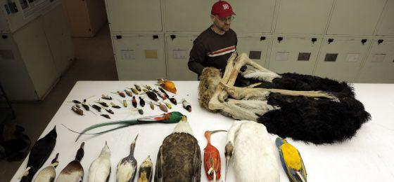 Algunas de las especies analizadas en el estudio genético comparativo. Fotografía fomada en el Museo Nacional de Historia Natural de Washington D. C.