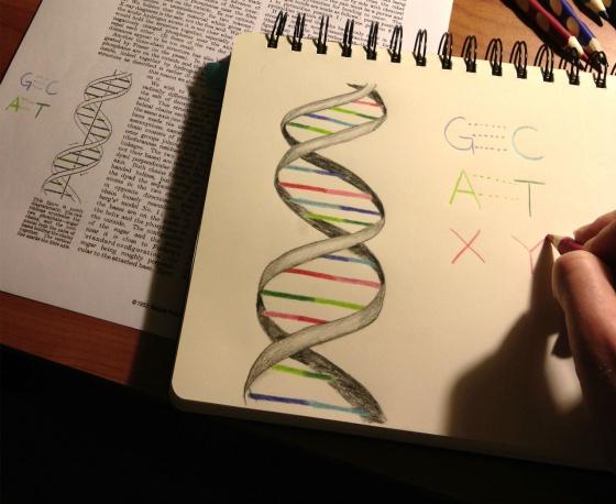 X e Y son las dos nuevas letras de ADN artificial.