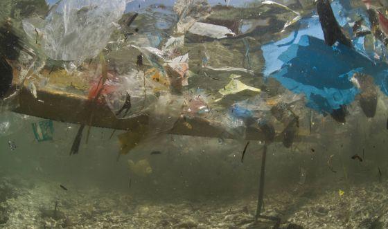 Ecología y Media Ambiente - Magazine cover