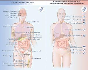 Diagrama con los tumores analizados, a la izquierda, los que se deben princpalmente al factor suerte, a la derecha, los tipos en los que intervienen además factores ambientales y hereditarios