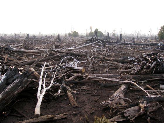 La quema de árboles para dejar paso al cultivo de la palma está acabando con las selvas tropicales de Indonesia