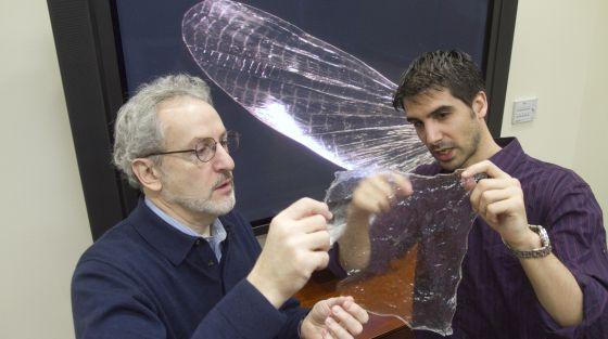 Javier Fernández (a la derecha) muestra una lámina de quitosano a Don Ingber, director del Instituto Wyss.