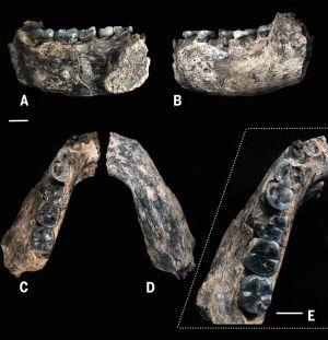 Varias vistas del nuevo fósil