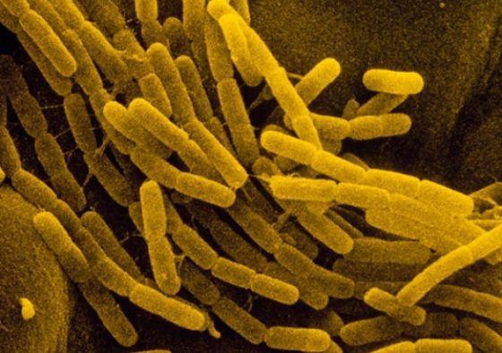 El genoma humano contiene genes donados por microbios