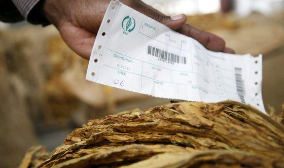 El precio del tabaco ha caído 3,17 euros esta semana con respecto al inicio de la temporada pasada en Zimbaue. Este país es el principal exportador de tabaco del continente africano.