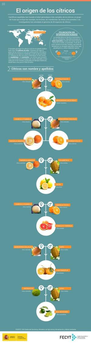 La naranja es hija de una mandarina y de la madre del pomelo