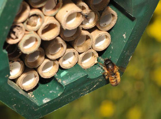 Las abejas prefieren néctar con pesticidas