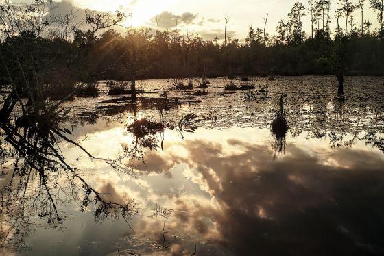 Los humedales rodean Monroeville. En la novela de Lee, algunas familias de agricultores pobres viven en lugares como el de la imagen.