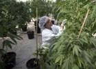 Lo que la marihuana puede hacer por su salud