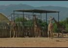 Un zoo en Grecia se queda sin dinero para alimentar a los animales