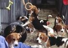 La investigación científica con perros desata la polémica en Europa
