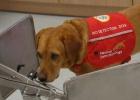 Perros capaces de oler el cáncer y otras tres cosas que nunca has visto