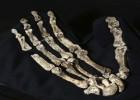 El 'Homo naledi', descubierto en Sudáfrica