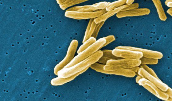 Bacterias de la tuberculosis.