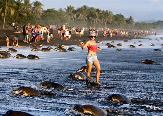 Turistas caminando entre tortugas