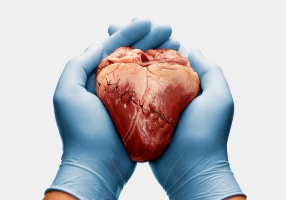 La científica que rejuvenece corazones