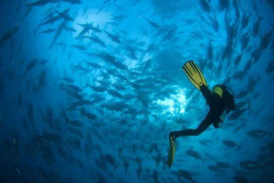 Solo el 3% de los océanos del planeta gozan de protección.