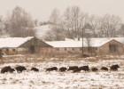 Los lobos reconquistan Chernóbil