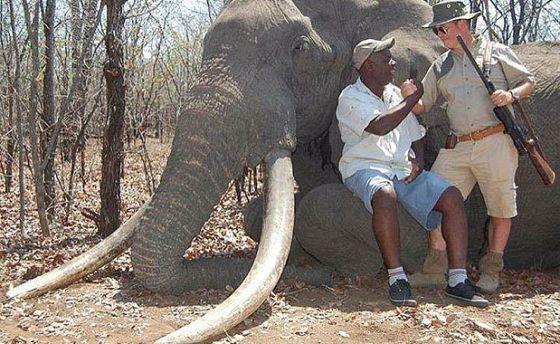 Caza de un elefante en África