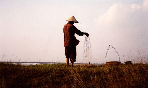 Un granjero tamiza semillas en un campo a lo largo del río Rojo en el norte de Vietnam.