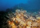 El coral se ahoga por la acidez del mar