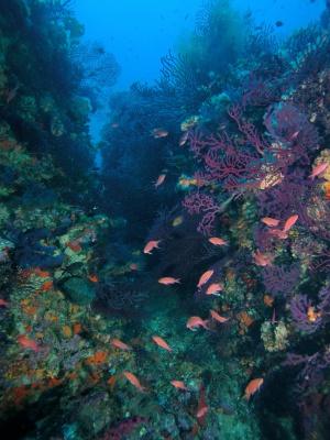 Zonas de coral fuera de las surgencias.