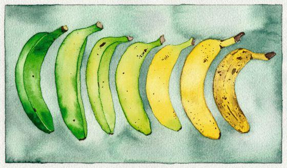 Salvar al plátano de Canarias