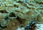 Un viaje a los arrecifes de coral