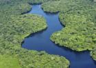 Metade das espécies de árvores da Amazônia corre risco de extinção