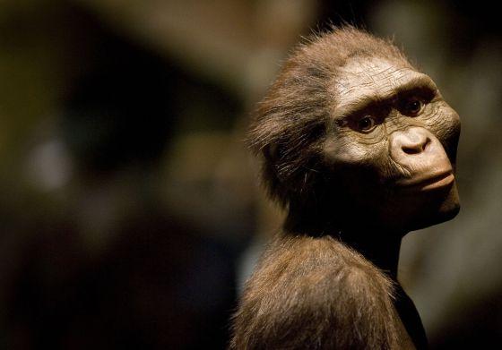 Lucy, la australopithecus