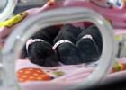 La mayor fábrica de clonación animal quiere salvar especies