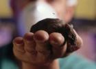 ¿Por qué se crea tanto revuelo con la experimentación con animales?