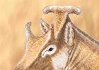 "Un animal ""parecido"" a Amidala ilumina la evolución de la jirafa"