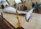 Anonymous tumba la web del primer ministro nipón por la caza de ballenas