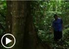 Transnacionales contra comunidades forestales