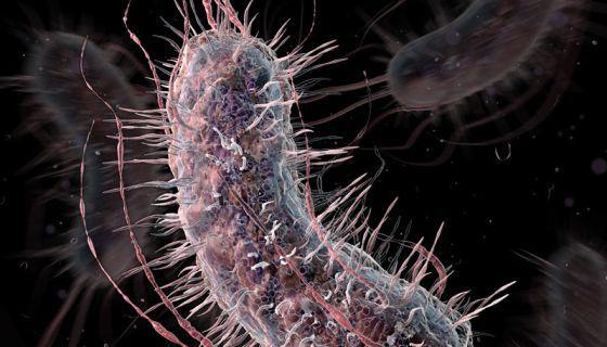 Una bacteria escherichia coli