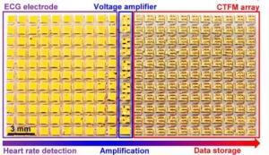 De izquierda a derecha: electrodos que recogen información, amplificadores y almacenamiento.