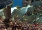 El mar sufre un exceso de acidez