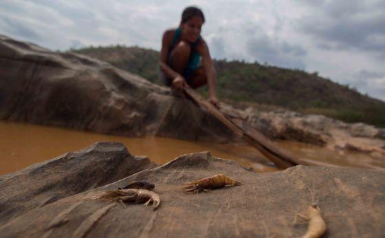 Biólogos y pescadores han tratado de salvar algunas especies del río.
