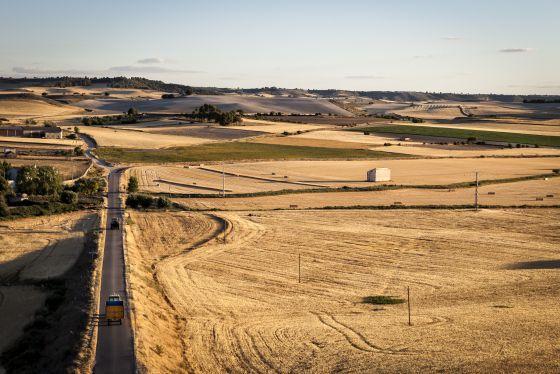 Planicie de cereal en la zona del Cerrato palentino.