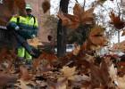 Limpieza de hojas en Madrid