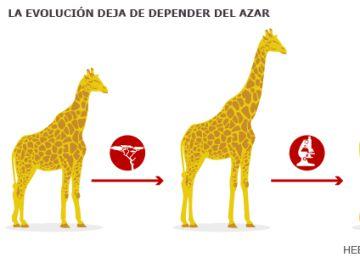 ¿Es este biólogo el próximo nobel español?