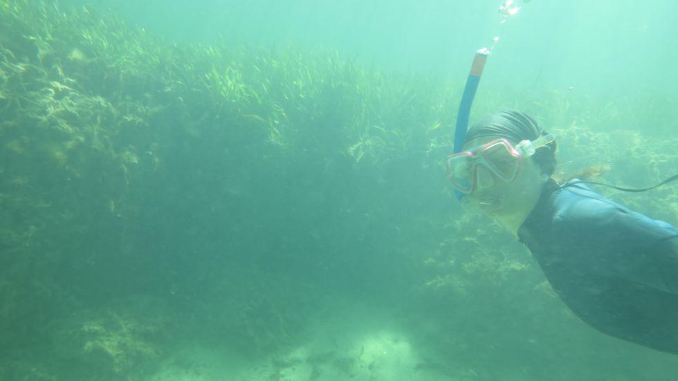 Pradera de posidonia en Oyster Harbour (Australia)