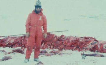 Un activista rodeado por crías de foca despellejadas.