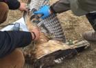 25.000 trampas mortales para las aves